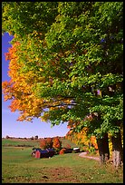 Maple tree and Jenne Farm. Vermont, New England, USA