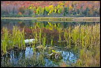 Reeds and pond, Green Mountains. Vermont, New England, USA