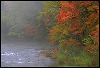 Misty river with trees in fall foliage. Vermont, New England, USA