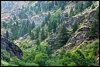 Side canyon with trees. Hells Canyon National Recreation Area, Idaho and Oregon, USA (color)