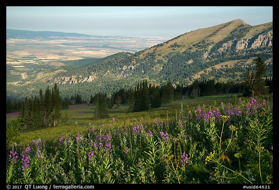 Wildflowers on mountains and fields on Idaho plain. Jedediah Smith Wilderness,  Caribou-Targhee National Forest, Idaho, USA (color)