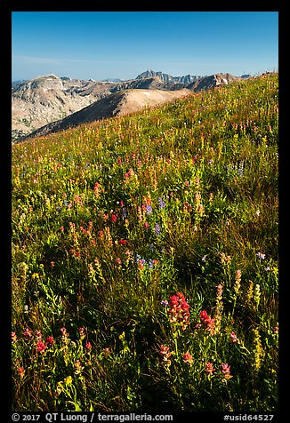 Multicolored wildflowers near Table Mountain. Jedediah Smith Wilderness,  Caribou-Targhee National Forest, Idaho, USA (color)