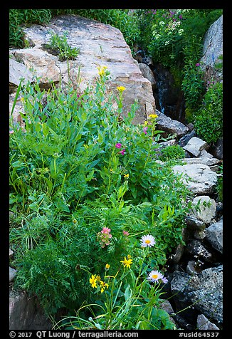 Wildflowers and stream, Huckleberry Trail. Jedediah Smith Wilderness,  Caribou-Targhee National Forest, Idaho, USA (color)