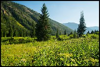 Meadow in late summer, Huckleberry Trail. Jedediah Smith Wilderness,  Caribou-Targhee National Forest, Idaho, USA ( color)