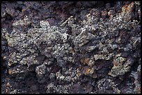 Close-up of colorful lava with lichen. Craters of the Moon National Monument and Preserve, Idaho, USA ( color)