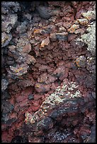 Close-up of red and purple lava rocks with lichens. Craters of the Moon National Monument and Preserve, Idaho, USA ( color)