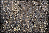 Close-up of lava and lichen. Craters of the Moon National Monument and Preserve, Idaho, USA ( )