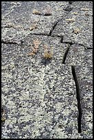 Fissures on pressure ridge. Craters of the Moon National Monument and Preserve, Idaho, USA ( )