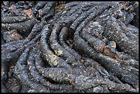 Close-up of Pahoehoe lava. Craters of the Moon National Monument and Preserve, Idaho, USA ( )
