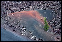 Pine tree, cinders and lava. Craters of the Moon National Monument and Preserve, Idaho, USA ( color)