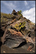 Basalt rocks with lichen. Craters of the Moon National Monument and Preserve, Idaho, USA ( )