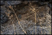 Grasses and basalt rocks. Craters of the Moon National Monument and Preserve, Idaho, USA ( color)