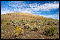 Rabbitbrush and Bear Den Butte. Craters of the Moon National Monument and Preserve, Idaho, USA ( color)