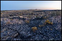 Pahoehoe lava from Wapi Flow and flowers at dawn. Craters of the Moon National Monument and Preserve, Idaho, USA ( )