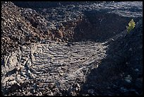 Former lava lake and tree, Pilar Butte. Craters of the Moon National Monument and Preserve, Idaho, USA ( )