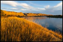 Tall grasses and cliffs at sunrise, Wood Bottom. Upper Missouri River Breaks National Monument, Montana, USA ( color)