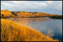 Grasses and bluffs at sunrise, Wood Bottom. Upper Missouri River Breaks National Monument, Montana, USA ( color)