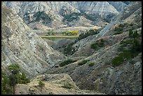 Badlands and cottonwoods in autumn foliage. Upper Missouri River Breaks National Monument, Montana, USA ( color)