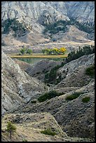 Rugged badlands and cottonwoods along river. Upper Missouri River Breaks National Monument, Montana, USA ( color)