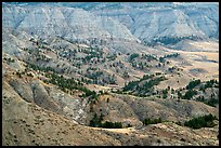 Conifers and badlands. Upper Missouri River Breaks National Monument, Montana, USA ( color)