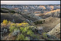 Shurbs and badlands. Upper Missouri River Breaks National Monument, Montana, USA ( color)