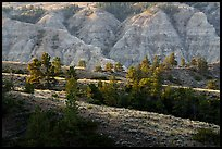 Ridges and badlands. Upper Missouri River Breaks National Monument, Montana, USA ( color)