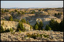 Sagebrush, conifers, and badlands. Upper Missouri River Breaks National Monument, Montana, USA ( color)