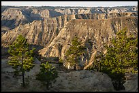 Pine trees and ridges of badlands. Upper Missouri River Breaks National Monument, Montana, USA ( color)