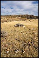 Tepee ring, Little Sandy. Upper Missouri River Breaks National Monument, Montana, USA ( )