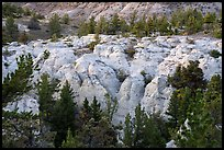 Sandstone pinnacles and pine trees. Upper Missouri River Breaks National Monument, Montana, USA ( color)