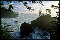 Coastline and trees, late afternoon, Samuel Boardman State Park. Oregon, USA (color)