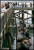 Tourists observing  Sea Lions in harbor. Newport, Oregon, USA