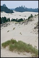 Grasses, trees, and dunes, Oregon Dunes National Recreation Area. Oregon, USA