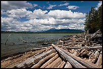 Crane Praire Reservoir and logs. Oregon, USA ( color)