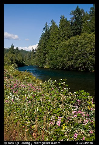 McKenzie River. Oregon, USA (color)
