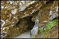 Cave entrance, Oregon Caves National Monument. Oregon, USA ( color)