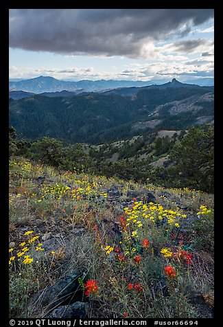 Wildflowers and distant Pilot Rock. Cascade Siskiyou National Monument, Oregon, USA (color)