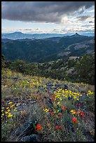Wildflowers and distant Pilot Rock. Cascade Siskiyou National Monument, Oregon, USA ( )
