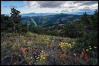 Pictures of Cascade Siskiyou