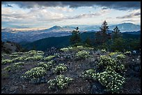 Wildflowers, late afternoon, Boccard Point. Cascade Siskiyou National Monument, Oregon, USA ( )