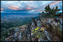Wildflowers in juniper scablands at sunset, Boccard Point. Cascade Siskiyou National Monument, Oregon, USA ( )