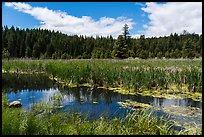Wetlands near Little Hyatt Reservoir. Cascade Siskiyou National Monument, Oregon, USA ( )