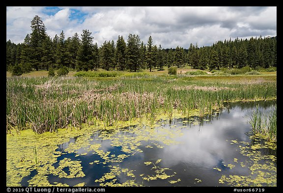 Wetlands near Little Hyatt Reservoir. Cascade Siskiyou National Monument, Oregon, USA (color)