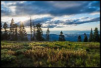 Meadow, sun, and view over mountains near Grizzly Peak. Cascade Siskiyou National Monument, Oregon, USA ( )