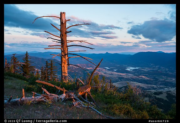 Last light on dead tree, with distant Pilot Rock, Grizzly Peak. Cascade Siskiyou National Monument, Oregon, USA (color)