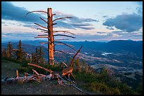 Last light on dead tree, with distant Pilot Rock, Grizzly Peak. Cascade Siskiyou National Monument, Oregon, USA ( )