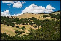 Hills with Oak woodlands, Emigrant Creek Area. Cascade Siskiyou National Monument, Oregon, USA ( )