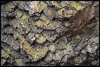 Detail of balsalt rock and lichen, Pilot Rock. Cascade Siskiyou National Monument, Oregon, USA ( )