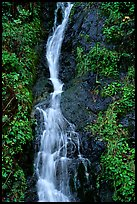 Waterfall, Hamburg Mountain State Parke. Oregon, USA ( color)