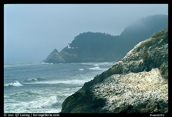 Rock with birds in fog,  Haceta Head in the background. Oregon, USA (color)